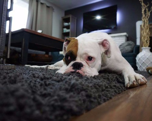 alfombras con los roombas